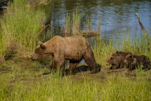 _JUL8454 Corr Crop Mommy and Cubs.jpg
