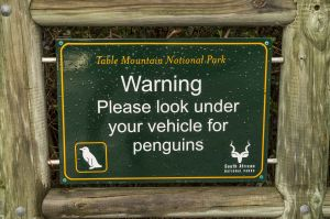 _MAY2031 South Africa Warning Penguins.jpg